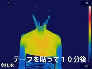 バドガテープ_05